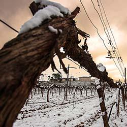 Bodega Rioja Vega nevado